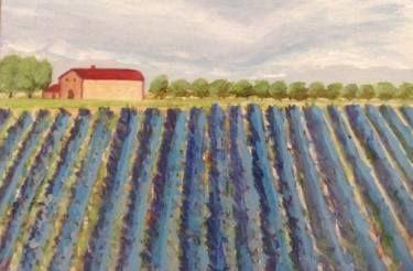 Lavander fields in Provence, France