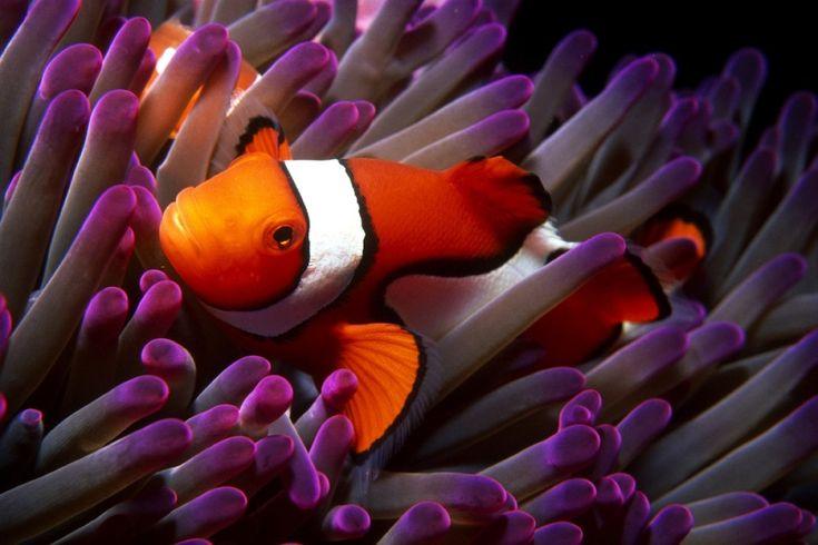 Los animales de la semana: especial bajo el mar. Y hay más: http://www.huffingtonpost.es/2012/07/06/los-animales-de-la-semana_n_1654220.html?utm_hp_ref=es-ciencia-y-tecnologia#
