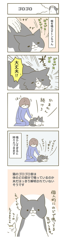 うちの猫がまた変なことしてる。 卵山玉子(たまごやま・たまこ) 【期間限定!毎日連載】「うちの猫がまた変なことしてる。」第9話  コミックエッセイ劇場