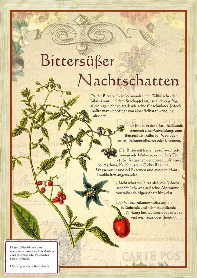 """Bittersüßer Nachtschatten http://www.kraeuter-verzeichnis.de/ Mehr zum Thema """"Gesundheit"""" gibt es auf interessante-dinge.de"""