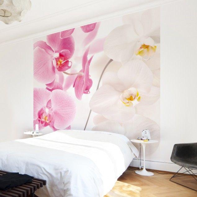 Fototapete Orchidee - Delicate Orchids - Vliestapete Quadrat