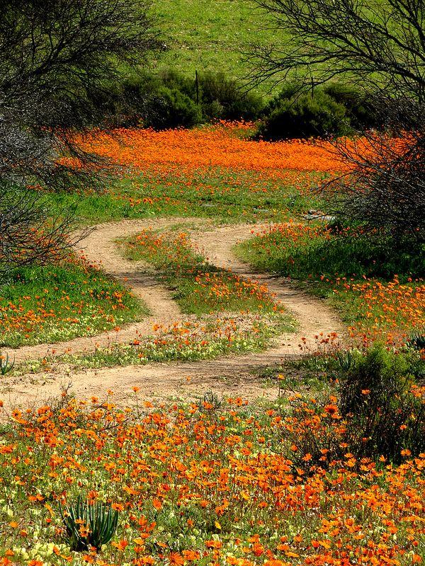 Namakwaland in al sy glorie! (Foto: Chris Preen via Flickr)