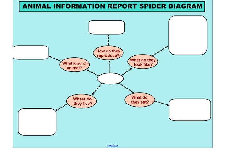 Animal Information Report Spider Diagram | Thinking Tools