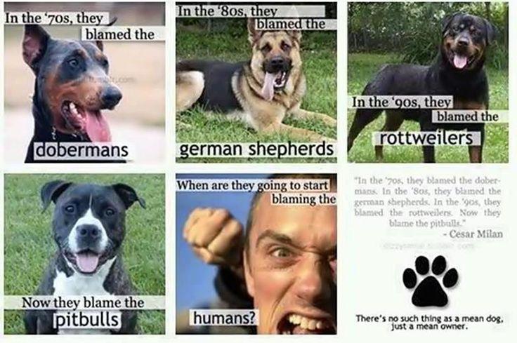 aggressive humans: Animals, Dogs, Quote, Pet, Pitbull, Truth, So True, Pit Bull