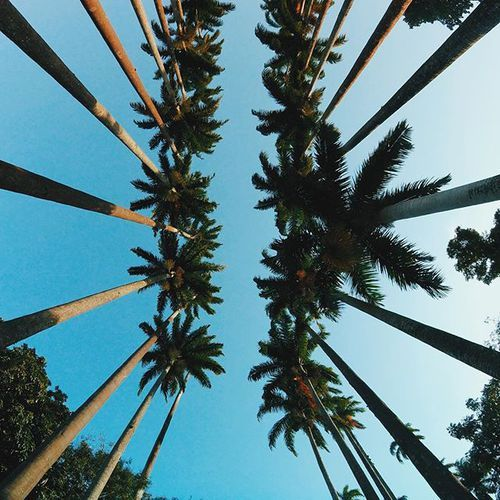 summer, palm trees,blue sky