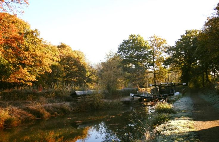 Beautiful autumn on the Wey and Arun Canal