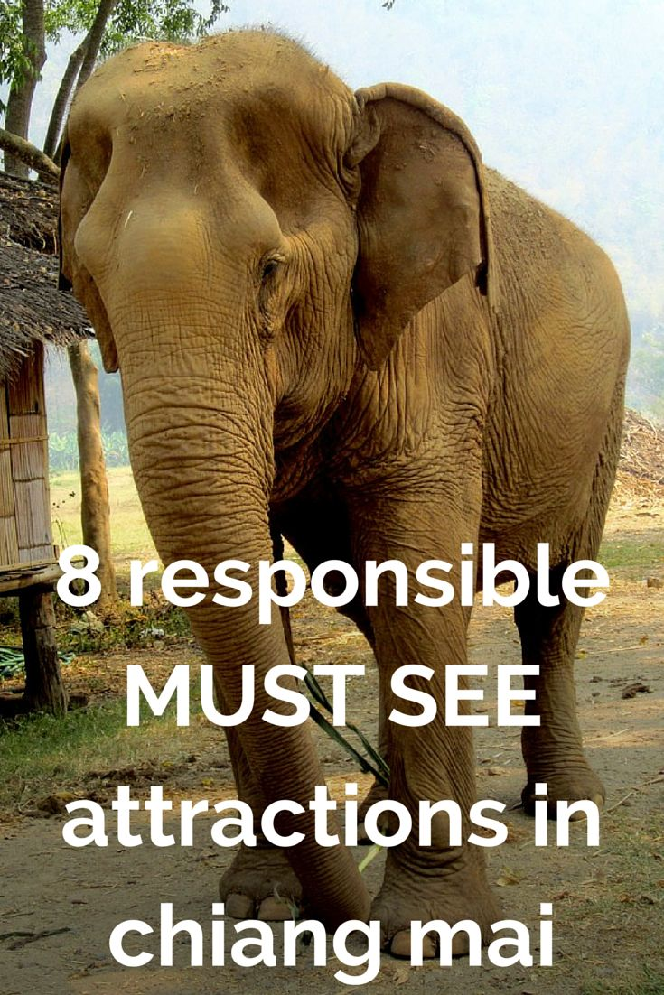 8 MUST SEE Responsible Attractions in Chiang Mai, Thailand http://www.angloitalianfollowus.com/alternatives-tiger-temple
