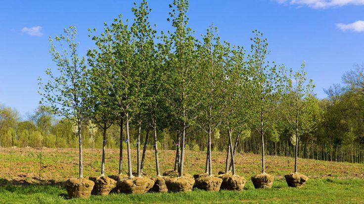 Ovocné stromy v březnu | Dům a zahrada - bydlení je hra