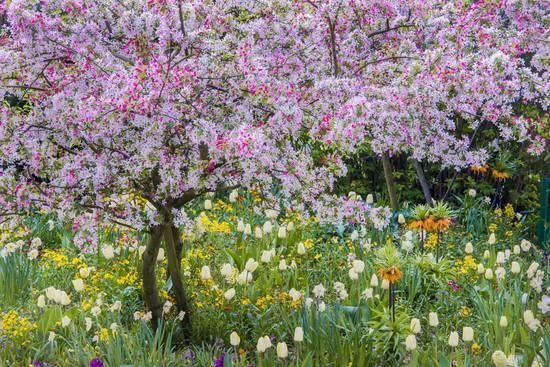 France Giverny. Springtime in Claude Monets Garden Photographic Print by Jayne