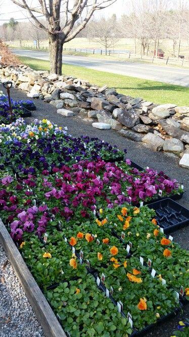 White flower farm connecticut image collections flower decoration white flower farm connecticut choice image flower decoration ideas white flower farm connecticut images flower decoration mightylinksfo