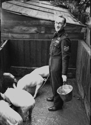 WAR TIME PIG CLUBS  Wartime meat rationing increased the need for people to keep animals for food. Groups of neighbours formed Pig Clubs which jointly owned and reared a few pigs. Any kitchen waste which could be saved or collected was fed to the pigs, then when the pigs were ready to butcher, the club members had a share of the pork or bacon produced. The Small Pig Keepers' Council persuaded local councils to allow people to keep a pig in their back yard.