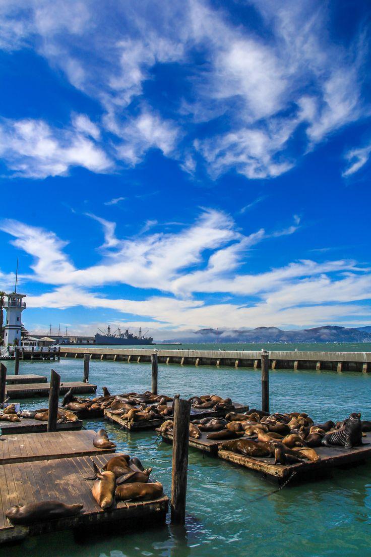 https://flic.kr/p/yeoCnF | Sea Lions - San Fransisco, California, US