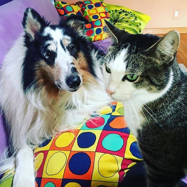 Cat Vs Dog Pics