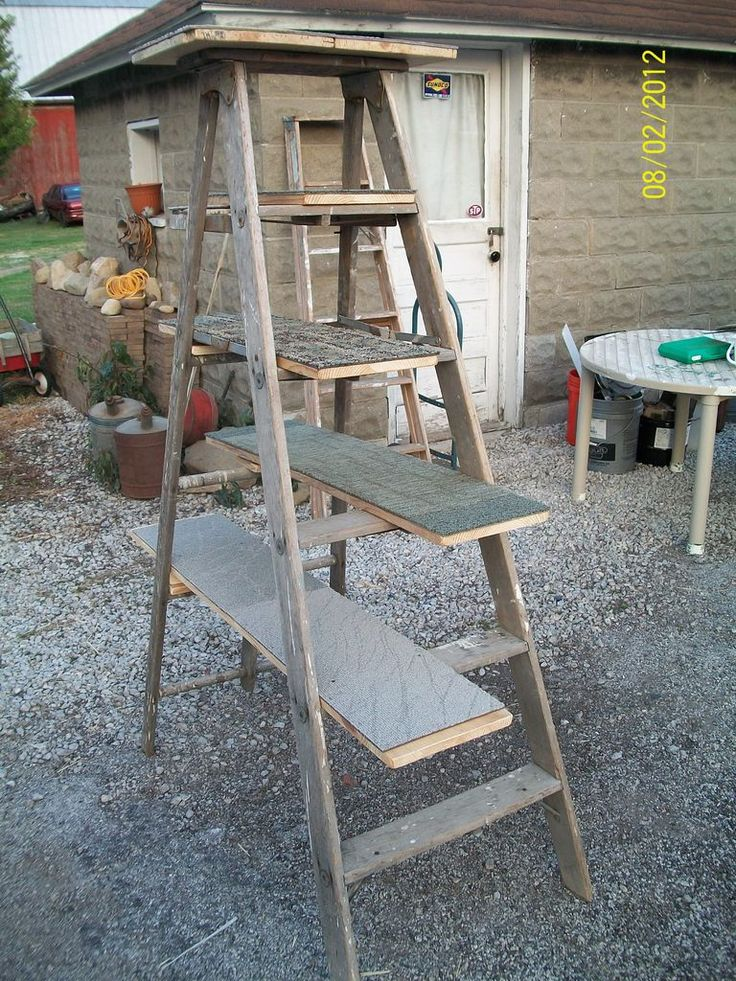 homemade cat tree, a wooden ladder, some planks of wood, a few carpet samples, and there you have it  a cat tree!