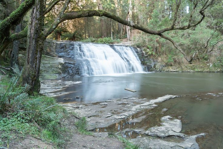 Morwell River Falls framed by an overhanging branch and swing