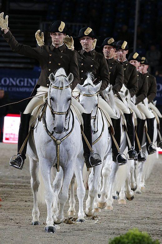 Lipizzaner horses - Spanish Riding School of Vienna
