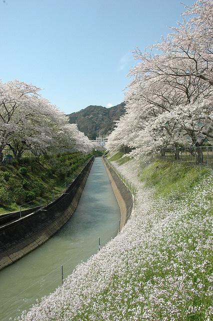 Mie Prefecture, Kitamuro-gun Kihoku town Kiinagashima Ward Miura, Japan