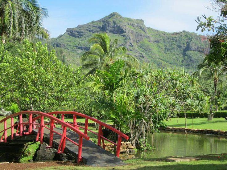 Sleeping Giant in Kapaa Kauai (Sleeping Giant Trail on Nounou Road, Nonou West Trail, Kapaa, Kauai, HI 96747)