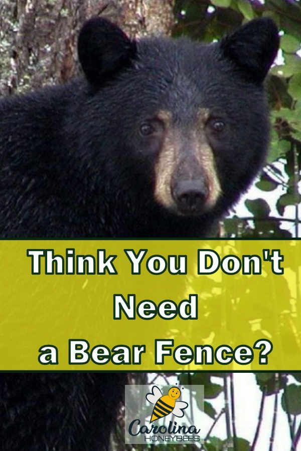 Using Electric Fences For Bears To Protect Your Bees Fence