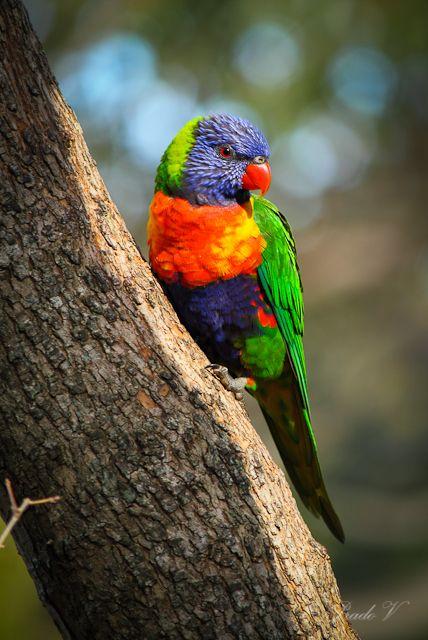Symbio Zoo - Wildlife photography