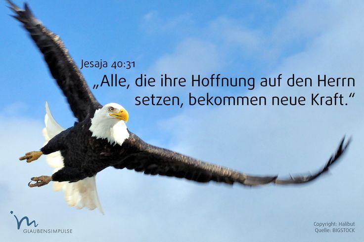 """""""Aber alle, die ihre #Hoffnung auf den #Herrn setzen, bekommen neue #Kraft. Sie sind wie #Adler, denen mächtige #Schwingen wachsen. Sie gehen und werden nicht #müde, sie #laufen und sind nicht #erschöpft."""" #Jesaja 40:31 #glaubensimpulse"""