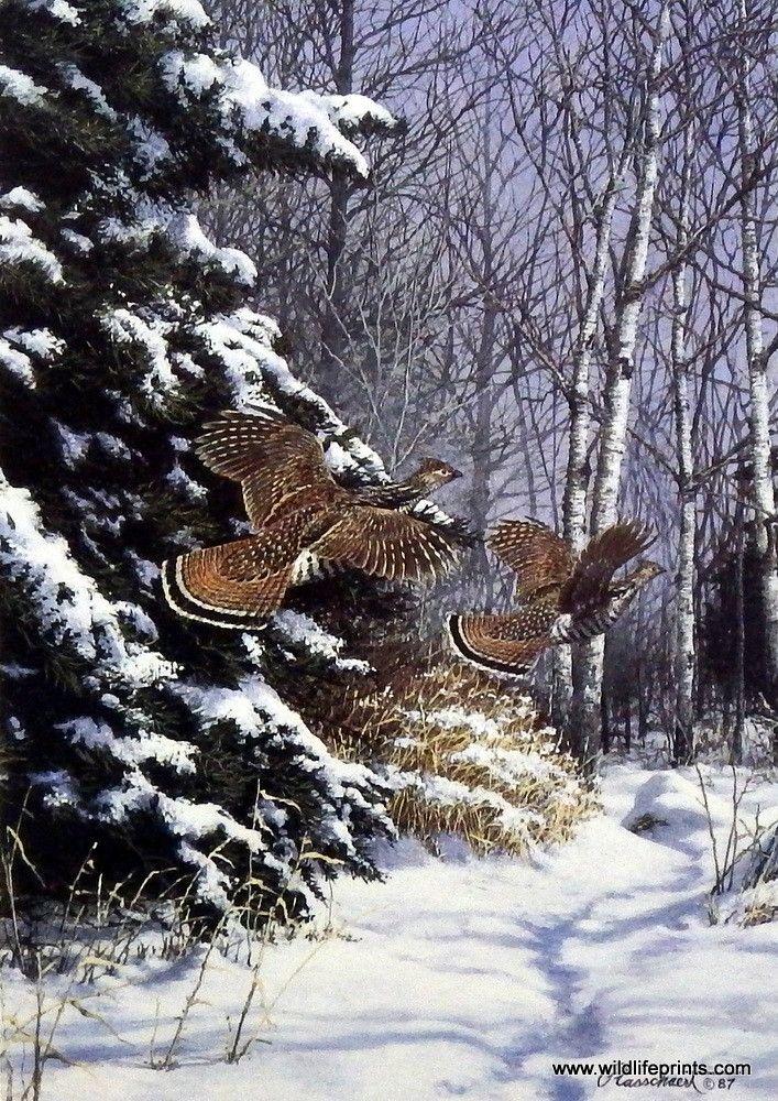 Richard Plasschaert Ruffed Grouse | WildlifePrints.com