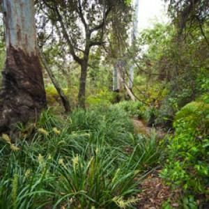 1,470-hectares of rural real estate for sale, Estuary Creek is set in abundant native Australian forest 45km north of Grafton and near the surfing beaches of Yamba and Illuka in NSW.