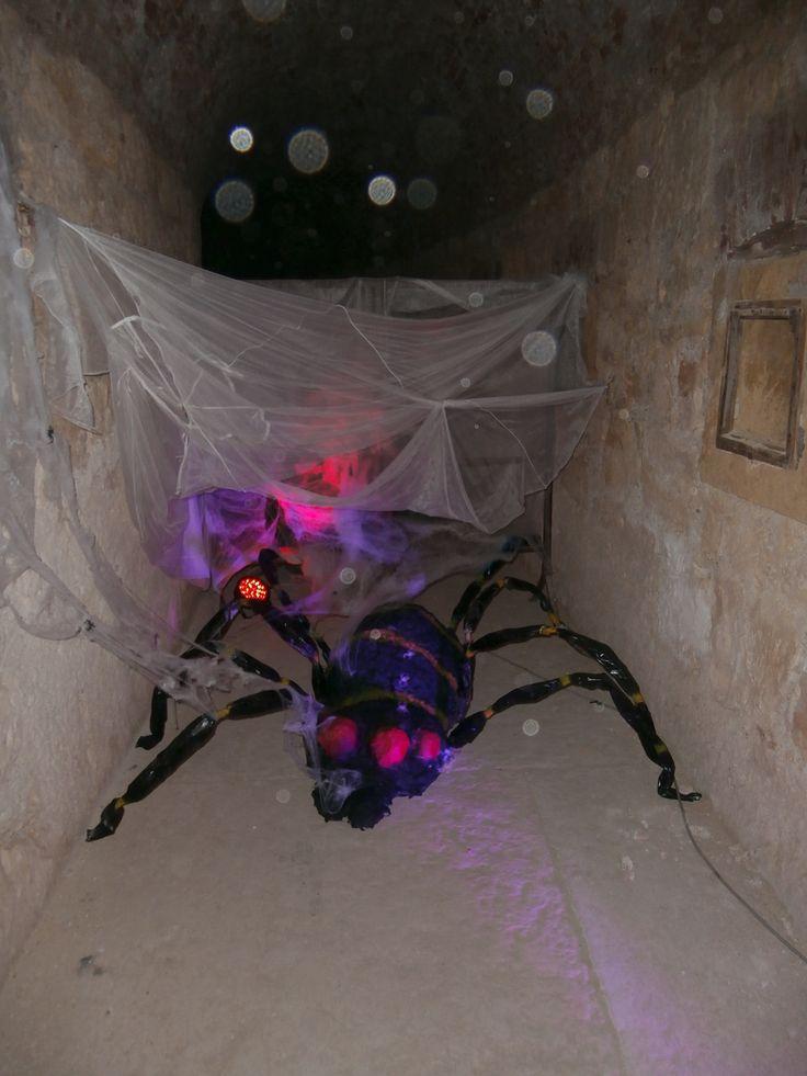 Il nostro ragno procede passo a passo....