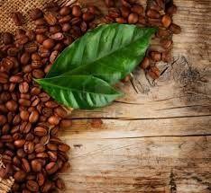 Café exclusivo en grano: Premium, Speciality y Blend.
