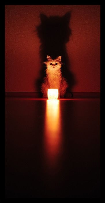 Looook into the flaaaame...: Big Cat, Ghosts Stories, Kitty Cat, Lights Cat, Candles, Photo, Shadows, Kittycat, Animal