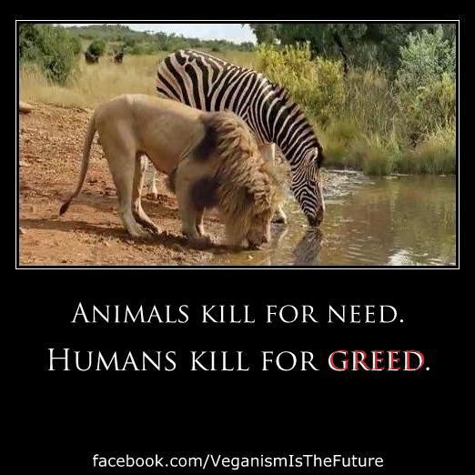 Animals kill for need Humans kill for greed