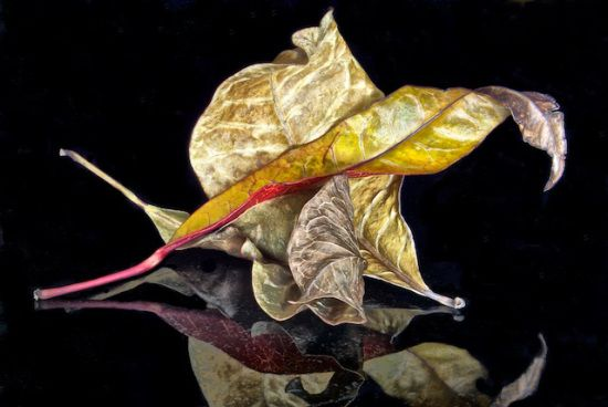 Kiriacon Dolores, Dried Leaves, photography, 8 x 12 in.