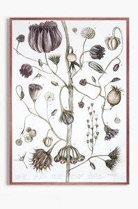 Frökarta är en botanisk poster illustreradav Jonna Fransson. Detaljerattecknade fröer växertillsammanspå en fantasifull stam. Motivet är tryckt på det obestrukna pappretMunken Polar Rough, ytvikt150 g. Storleken är50 x 70 cm och passar istandardramar. Signerad av Jonna Fransson.Levereras i papprör. Ramen ingår ej.