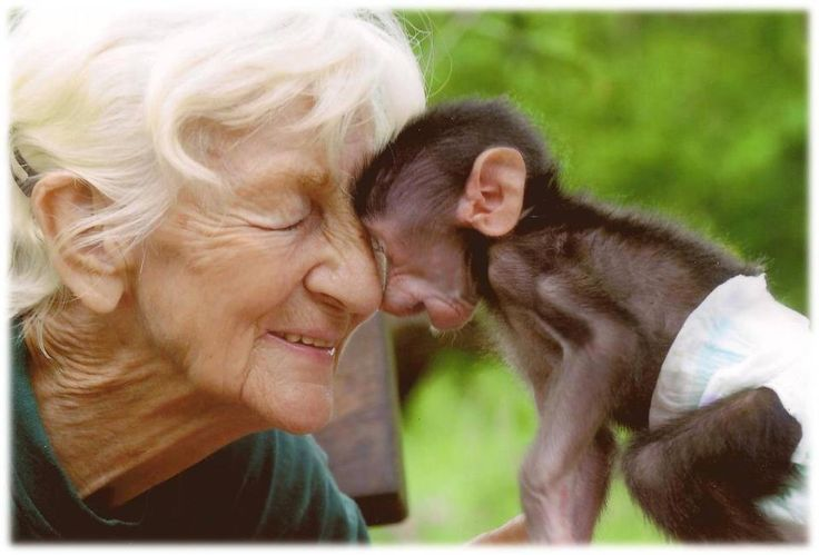 Rita Miljo— A great woman who saved thousands of baby baboons and reintroduced them into the wild, until her death in July 2012. She was 81 years old. ♥