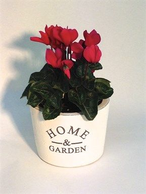 """Home & Garden Ceramic with Cyclamen  classic white ceramic with """"home & garden"""" stenciled on front filled with our lush flowering cyclamen in a wide variety of colours  http://www.summerhillnurseries.com.au/www/content/default.aspx?cid=1954&fid=1374"""