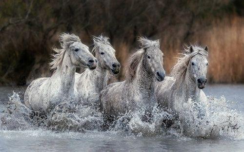Marsh Run.... by Paul Keates