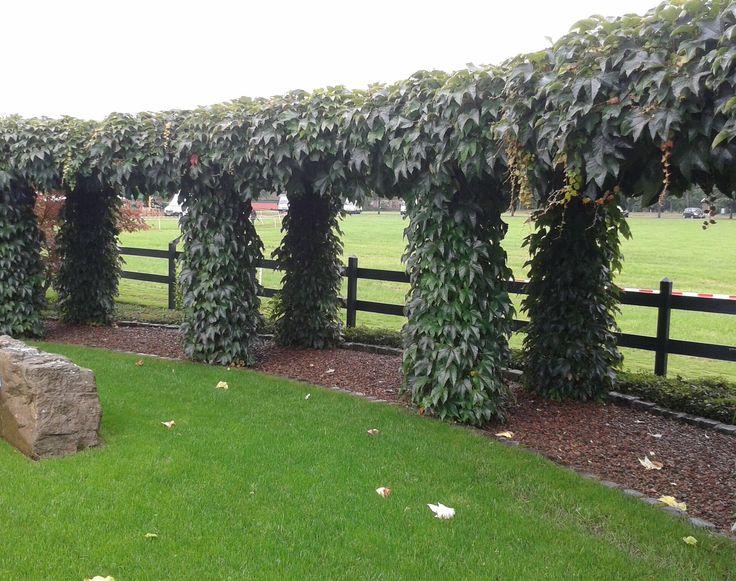 17 beste afbeeldingen over klimplanten op pinterest tuinen blauweregen en fruit - Wijnstokken pergola ...