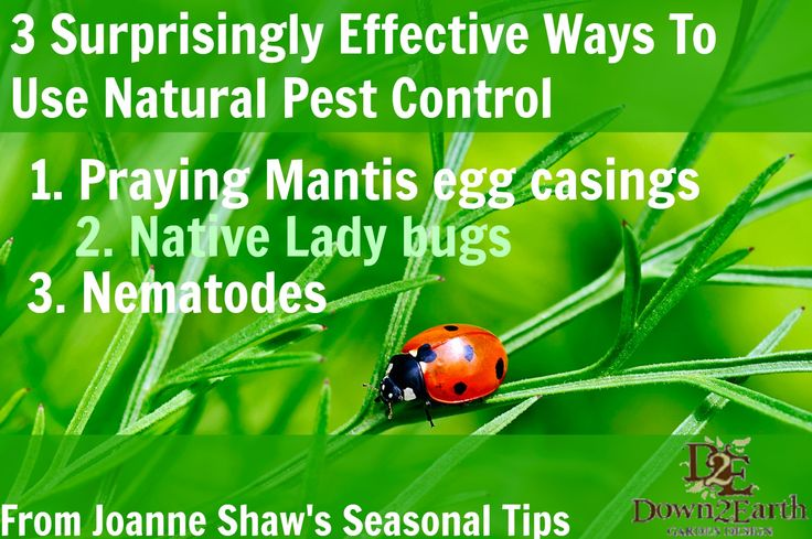 3 Surprisingly Effective Ways To Use Natural Pest Control   http://www.down2earth.ca/3-surprisingly-effective-ways-to-use-natural-pest-control/