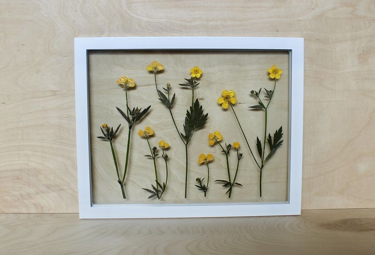 Pressed and preserved botanical art and decor from Frame & Flora bring the elements we love about nature indoors for everyday enjoyment. Bring the outside in!    THE FRAME  ✻ Float Frames offer great depth and texture with plants mounted between two panes of glass  ✻ Unique gallery wall addition, yet strong enough to display on its own ✻ Simple and versatile bright white finish  ✻ Easily compliments modern, contemporary, classic, or rustic decor ✻ Meant to be displayed vertically  ✻ Measu...