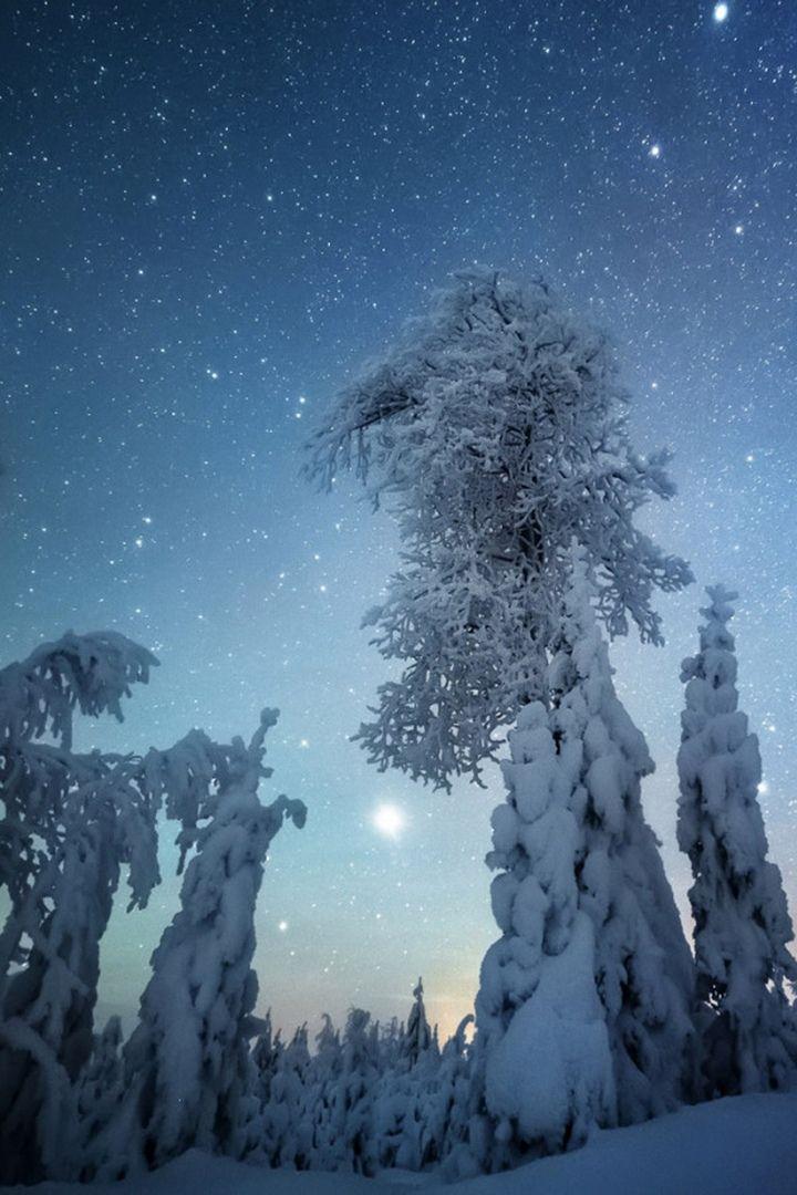 Nature Forest Snow Winter Sky Beautiful Night Beautiful Night Sky Starry Night Sky Winter Sky
