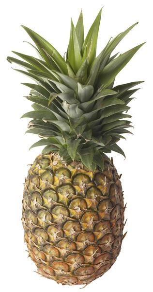 How to plant a pineapple in a container backyard for How to plant a pineapple top in a pot