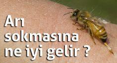Arı sokmasına ne iyi gelir,arı sokması ilk yardım,arı sokması…