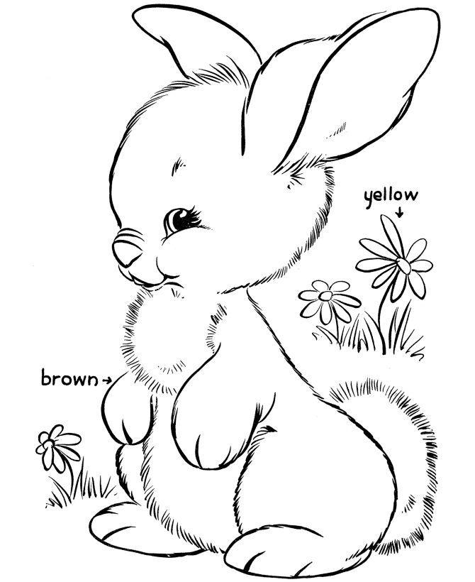 Easter Rabbit Coloring Pages Ikan Gambar Fantasi