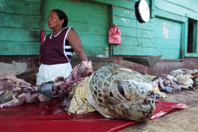 An indigenous Miskito woman sells turtle meat at a town market in Puerto Cabezas, along Nicaragua's Caribbean coast August 25, 2010. Around five hundred turtles are sold for food per month in the port. The going rate for turtle meat is approximately $1.10 per pound. (Photo by Oswaldo Rivas/Reuters)