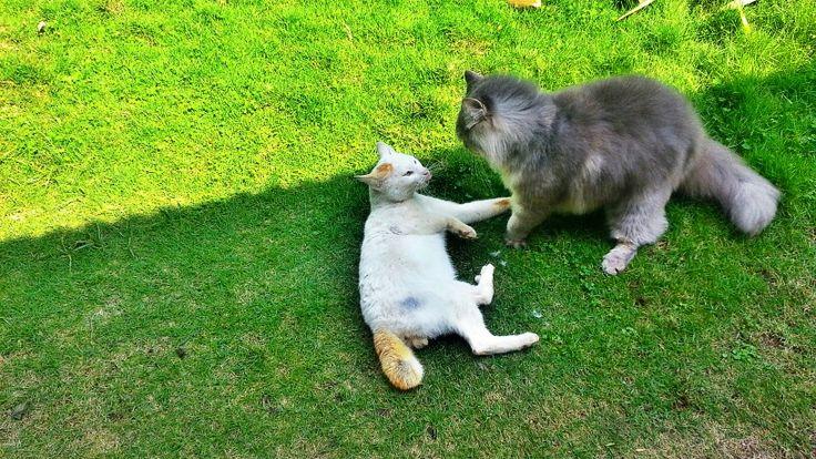 Benji and stray cat