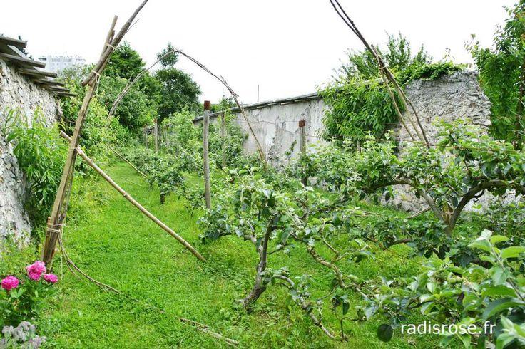 Murs à pêches de Montreuil http://radisrose.fr/murs-a-peches-de-montreuil/ #pêches #montreuil