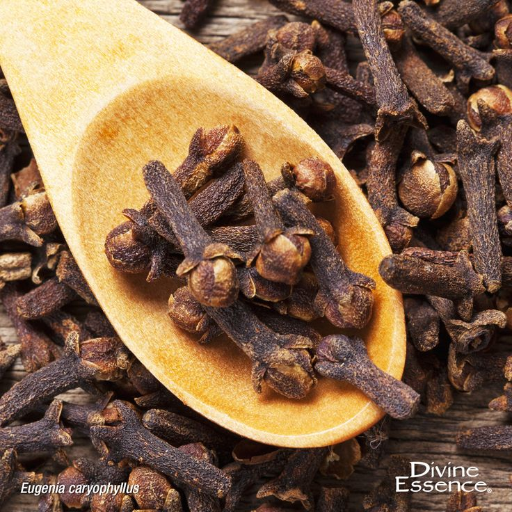 Its value recognized centuries ago, clove bud is used in traditional Indian and Chinese medicine. Clove bud essential oil is used in aromatherapy for its analgesic properties to temporarily relieve toothache. L'huile essentielle de Clou de Girofle est utilisée en aromathérapie pour son action analgésique afin de soulager temporairement les maux de dents.