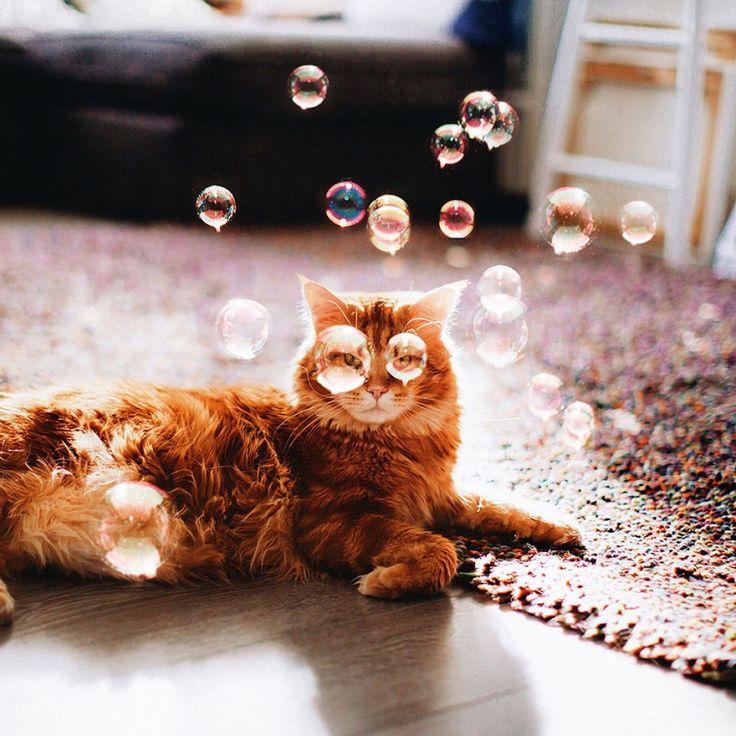Открытки коты воители сперва