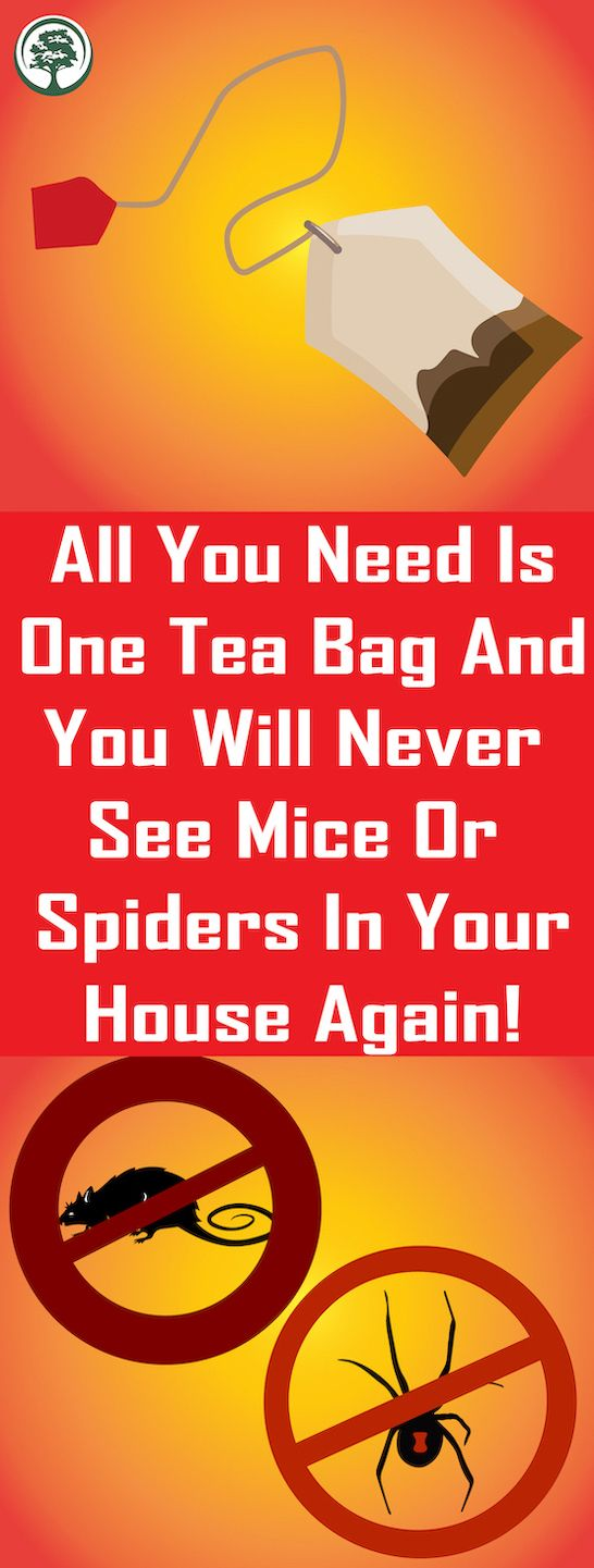 All You Need Is One Tea Bag And You Will Never See…