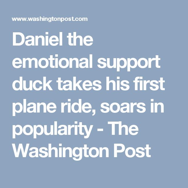 Daniel the emotional support duck takes his first plane ride, soars in popularity - The Washington Post